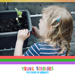 Young Scholars Norwest